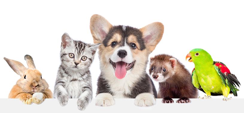 Pet Care School